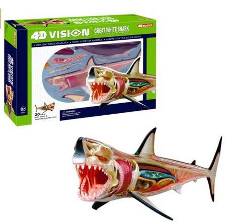 great-white-shark-anatomy-model
